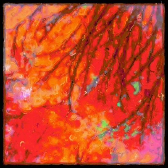 Rose Glow Canopy